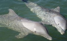 Visiting the Florida Keys with Kids | Review of the Dolphin Research Center | Ciao Bambino Blog