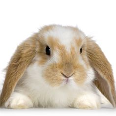 Easter Bunny Theme Ideas: Whether or not you will be doing activities in your preschool program to celebrate Easter, spring time is a good time to learn about Rabbits. Here are some ideas and resources to have some hopping good fun.