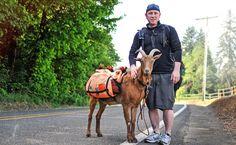 ~Across America:  The goat's named is LeeRoy Brown.