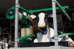 Komfortzone Liegebox: Das Kuh Mobil zeigt wieviel Wellness im Stall steckt.
