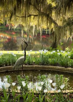 Crane Statue and Pond, Middleton Place, Charleston, SC © Doug Hickok All Rights Reserved A garden sculpture cranes its neck as if to meet. Parks, Middleton Place, Water Features In The Garden, Interior Exterior, Garden Inspiration, Beautiful Gardens, Amazing Gardens, South Carolina, Great Places