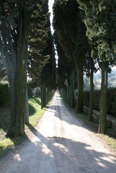 tree lined dirt roads