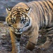 FREE Taronga Zoo Child Ticket with Purhase - Visa Cardholders! - Free Samples Australia