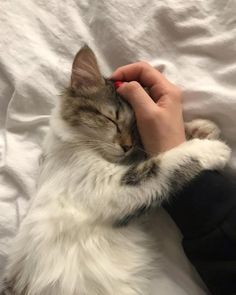 These cute kittens will make you happy. Cats are awesome companions. Cute Baby Animals, Animals And Pets, Funny Animals, Funny Cats, Wild Animals, Cute Kittens, Cats And Kittens, Derpy Cats, Ragdoll Kittens