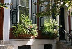 urban Philadelphia: window boxes