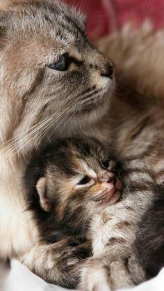 Mama and baby...so sweet.