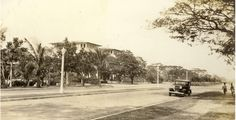 Dewey Boulevard in the 1920s , graced with Acacia and flame trees.
