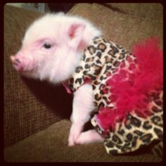 Pigs:) i would probably do this to my pig