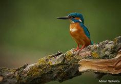 _NAP7484 Danube Delta, Boat Tours, Bird Watching, Animals, Animales, Animaux, Animal, Animais
