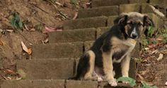 Que el Estado Cree un Refugio para los Perros y Gatos en Situación de Calle