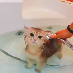 Animals Discover Kitty bath time Cool Cat Tree House Вот бы моему коту так л - Hunde und Katzen Cool Cat Trees Cool Cats I Love Cats Cute Funny Animals Cute Baby Animals Funny Cats Happy Animals Funny Humor Cute Cats And Kittens Cute Funny Animals, Cute Baby Animals, Animals And Pets, Funny Cats, Cute Cat Gif, Happy Animals, Animals Images, Cool Cat Trees, Cool Cats