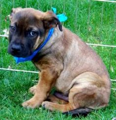Neo is an adoptable Hound Dog in Eatontown, NJ. Just look at his cute face! Little Neo is a chunky monkey. He's about 3-4 months old and weighs about 15 lbs. We rescued him from a kill shelter in SC. ...