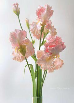 Clay handmade irises, flowers from polymer clay: Розовые ирисы. Керамическая флористика. - В НАЛИЧИИ - Fito Art