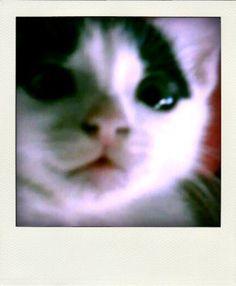 Meet the adorable, Casper! =)