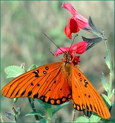 the beauty of a butterfly~