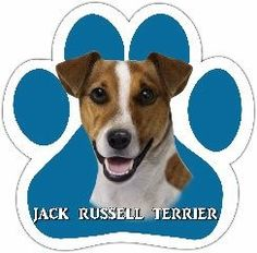 Jack Russell Car Magnet