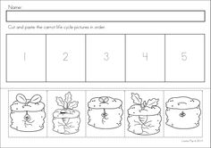 Kindergarten SPRING Math & Literacy unit. 93 pages in total. A page from the unit: sequencing - carrot life cycle