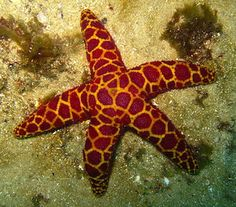 Sea stars and mosaics | Code for Life
