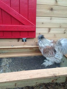 This is the luxury coop I built for our 5 chickens about 6 months ago. Now that the weather has finally thawed, I thought I'd post some pictures. Chicken Coop Pallets, Chicken Coop Plans, Diy Chicken Coop, Pallet Coop, Chicken Life, Chicken Coop Designs, Raising Chickens, Chickens Backyard, Coops