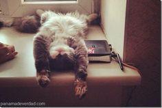 Lo que las fotos de tu gato revelan de ti - http://panamadeverdad.com/2014/07/25/lo-que-las-fotos-de-tu-gato-revelan-de-ti/