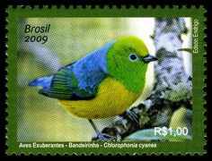 Gulfmann Stamps Collection: BRAZIL ~ Brazilian Birds Cover