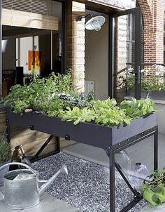 Pas besoin de beaucoup de m² pour voir la vie en vert et cultiver ses légumes. C'est une belle plante qui nous le dit. Marie Duvivier, paysagiste chez Balcoon nous donne ses conseils pour avoir la main verte et récolter tomates et salades en ville....
