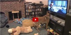 This Adorable Dog Freaking Out Over a Disney Film Is All of Us
