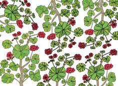 Geranium illustration.