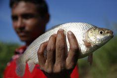 Economic crisis drives Venezuelans to fish smuggling   La crisis empuja a venezolanos al contrabando - Yahoo Noticias en Español