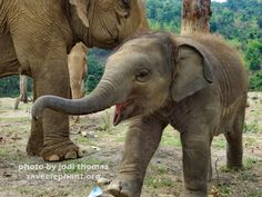 Baby Elephants Daily — They always look so happy!