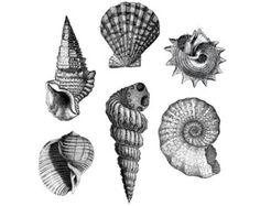 seashell tattoo – Etsy