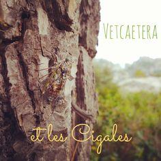 France - La Cigale ayant chanté tout l'été... Vidéo à voir ici : http://vetcaetera.com/2013/08/18/la-cigale-ayant-chante-tout-lete/