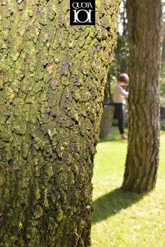 Natural bark