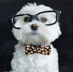 Un sábado un poco casual para una fiestita   #PetsWorldMagazine #RevistaDeMascotas #Panama #MascotasPty #PetsMagazine #MascotasAdorables #Perros #PerrosPty #PerrosPanama #Pets #PetsLovers #Dogs #DogLovers #DogOfTheDay #PicOfTheDay #Cute #SuperTiernos