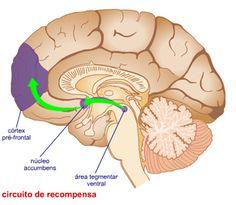 La neuroplasticidad constituye un concepto amplio  que se puede concretar según  los diferentes niveles del sistema nervioso: neuronas, sinapsis o mapas corticales. El aprendizaje a nivel neuronal consiste en que las neuronas pueden instalar nuevo cableado en función de la experiencia. La propiedad de la neuroplasticidad tiene una relación directa con la mejora en determinados trastornos del aprendizaje. Ésta permite fortalecer las regiones cerebrales implicadas en el procesamiento del…