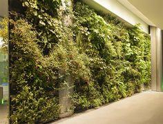 Photos et vidéos de mur végétal - vertiss