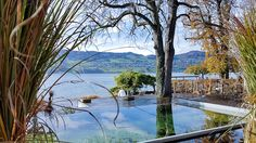 #Wellness #Spa im #Seerose Resort am #Hallwilersee #Pool Wellness Resort, Wellness Spa, Best Spa, Green Nature, Switzerland, Most Beautiful, Resorts, Vacation Resorts, Beach Resorts
