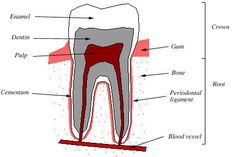 Curing Tooth Decay, yes teeth can actually re-mineralize.  Taking responsibility for ones health is beautiful!