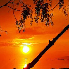sunset, orange color, sun, silhouette, branch, tree, scenics, sky, beauty in nature, tranquility, nature, bare tree, tranquil scene, idyllic, water, sunlight, outdoors, bird, low angle view, majestic