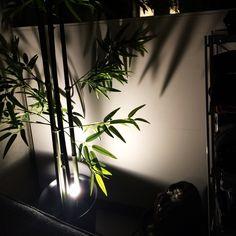 禅/間接照明…などのインテリア実例 - 2014-07-17 11:25:36 | RoomClip(ルームクリップ)