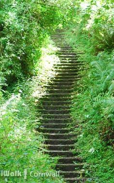 Steps down to the valley floor in Trebarwith Valley