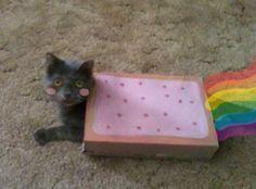 Nyan Cat Lives!