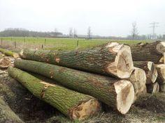 Populieren bomen Firewood, Texture, Crafts, Surface Finish, Woodburning, Manualidades, Handmade Crafts, Craft, Arts And Crafts