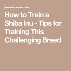 How to Train a Shiba Inu - Tips for Training This Challenging Breed