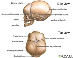 What nursing students should know about skulls: the anterior fontanel is diamond shaped and closes around 18 months. The smaller, triangular shaped fontanel closes between 6-8 weeks following birth in a full-term infant. Sutures should be smooth when palpated.