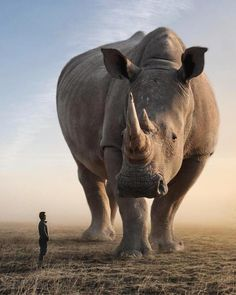 19 White Rhinoceros, Giant Animals, Web Design, Fantasy Pictures, Unique Animals, S Pic, Photomontage, Surreal Art, Beautiful Sunset