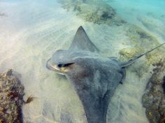 Scuba Diver Girls | Baby Bat Ray & the Leopard Sharks!