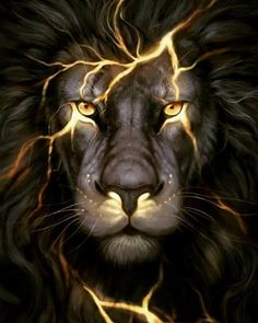 Lion wallpaper · HI LOVE TO 😙😚☺😎☺☺☺😎☺☺😚☺☺