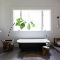 What Design People Are Doing On Instagram: Fiddle leaf fig tree + bathtub envy courtesy of @homepolish down in Dallas.