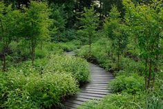 dan pearson studio: tokachi millenium forest raised walkways in the tokachi millenium forest Forest Path, Forest Garden, Woodland Garden, Garden Paths, Garden Bridge, Garden Trees, Landscape Architecture, Landscape Design, Garden Design
